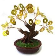 Денежное дерево, h=16 см